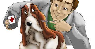 Vétérinaire : urgence animaux